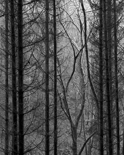 'Through the trees #2'