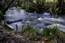 Edford River