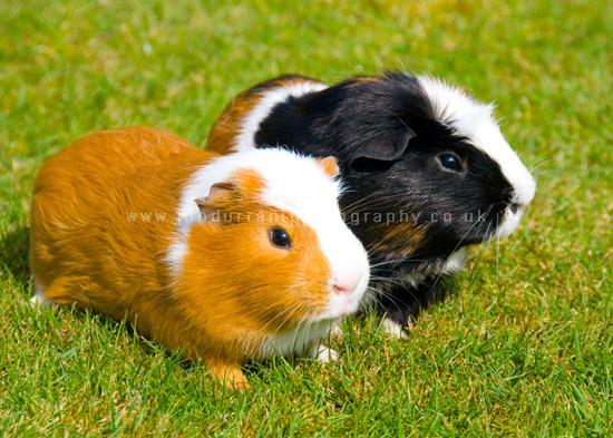 GP & Alfie