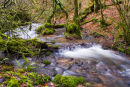 River at Harridge