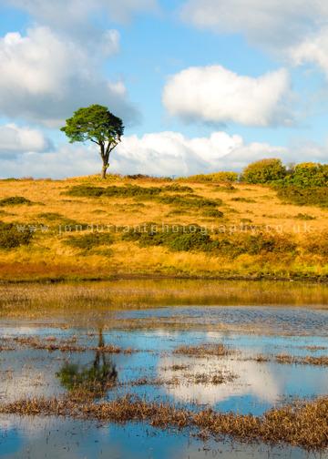 Priddy Pond