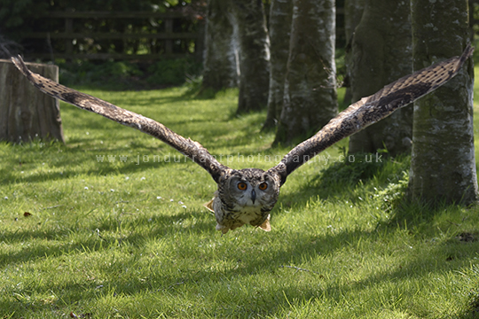 Owl Low