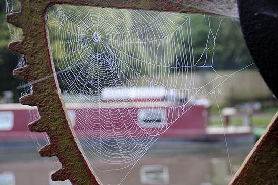 Dundas Spiders Web