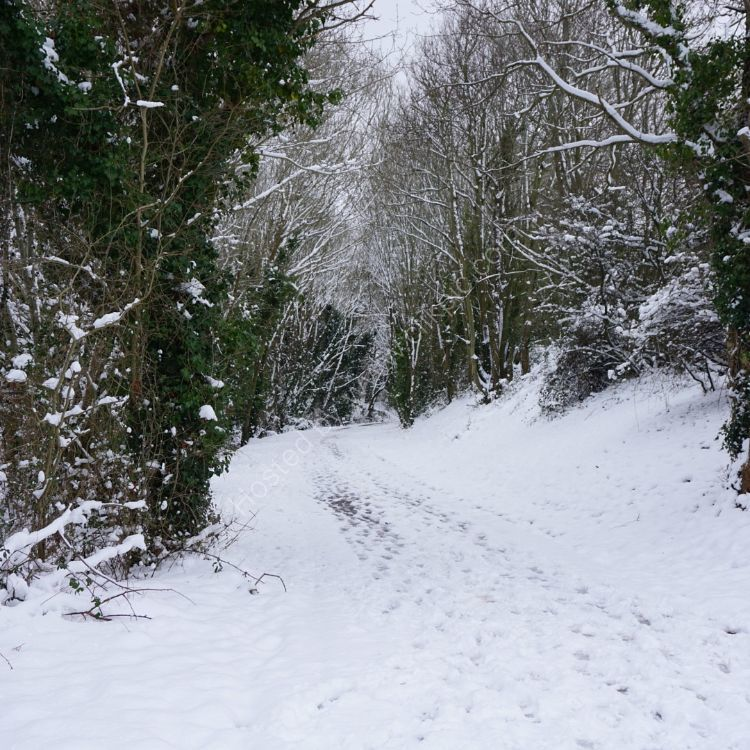 The path to town