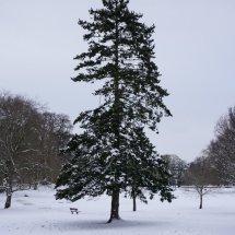 Snowy oark