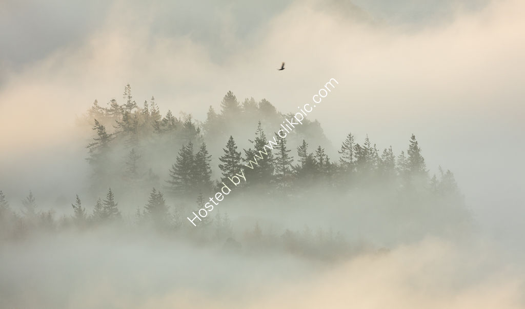 Soaring Above the Forest, Ullswater