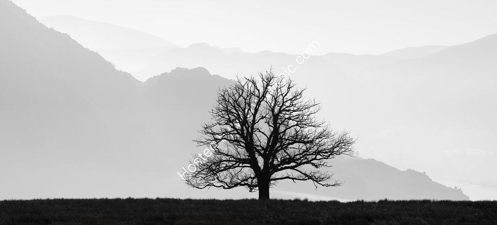 Solitary Oak Tree, Ullswater
