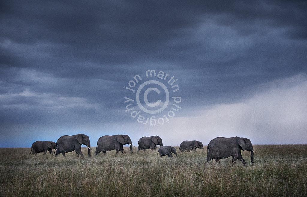 Elephant Herd at Dusk