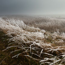 Frosty Grasses, Norfolk Broads