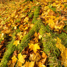 Autumn Leaves, Tarn Hows