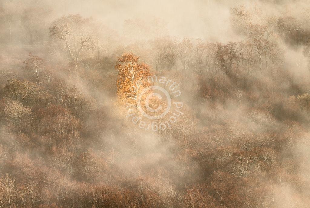 Misty Tree, Ullswater