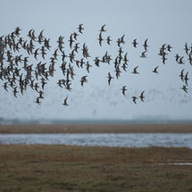 Knot Display at Snettisham 2