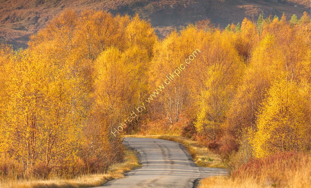 Torridon Autumn Yellows