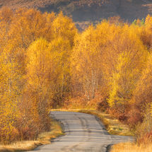Torridon Autumn Yellows