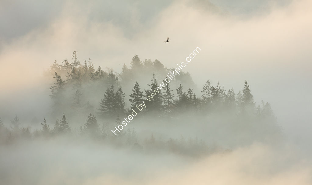 Soaring Above the Forest