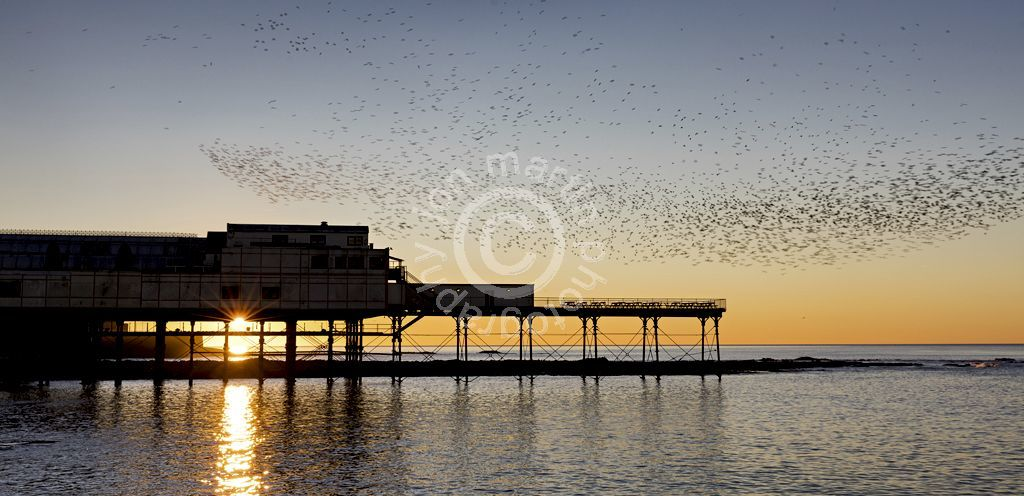 Starlings over Abersystwyth Pier