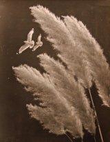 Gulls & Grass - 1954