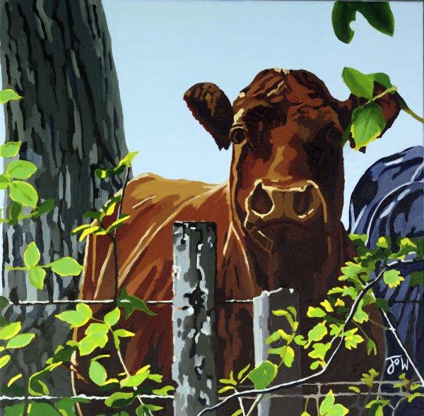 Cows V