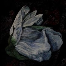 Study for Rosa Rugosa