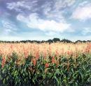 Maize Field SOLD