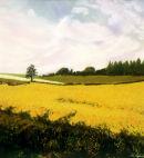 Cornfield.Hampshire.