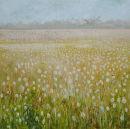 Field.Opium Poppies.