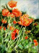 Oriental Poppies 1.