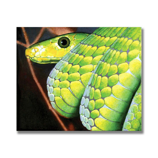 Green Mamba, Acrylic on Canvas, 36 x 31cm