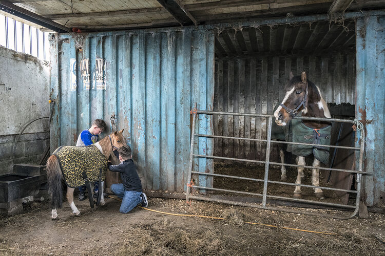 Johnny and Fono in Horse Stable, Limerick, Ireland 2021