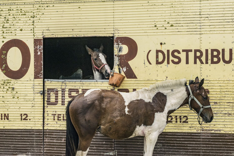 Two Horses, Limerick, Ireland 2018