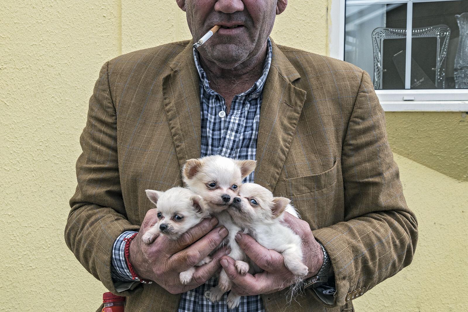 Three Puppies, Limerick, Ireland 2019