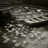 Boats and Waterlilies, Corofin, Co. Clare, Ireland 2012