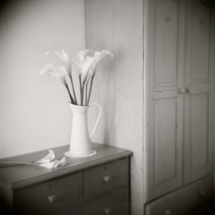 Calla Lilies, Tipperary, Ireland 2013