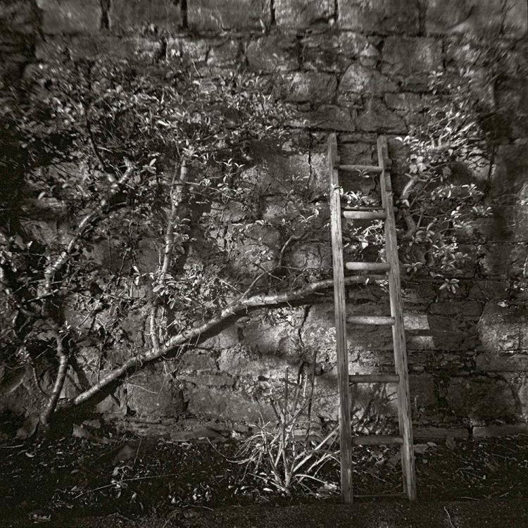 Ladder, Tipperary, Ireland 2013