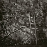 Ladder, Tipperary, Ireland 2013