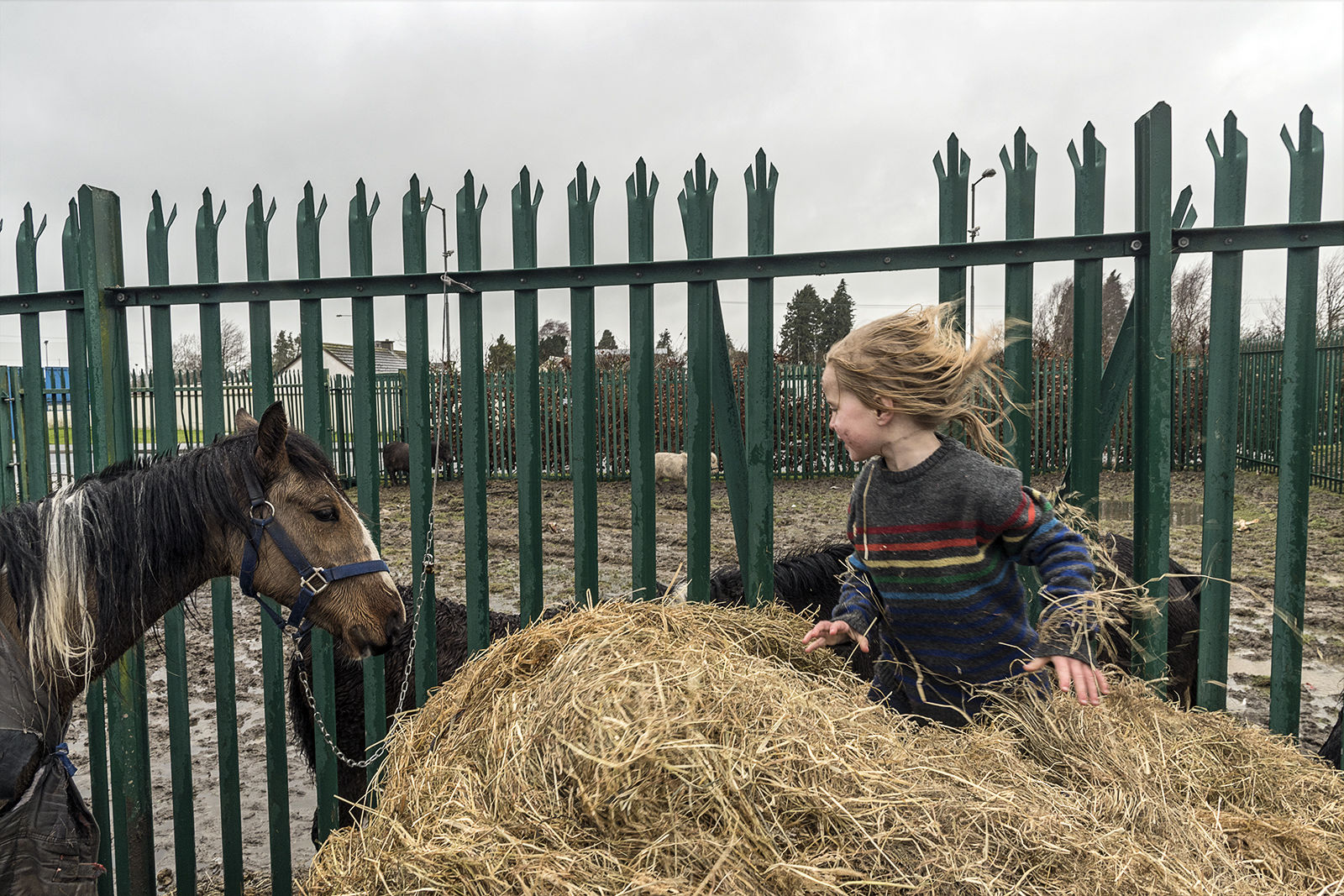 Amy and Horse, Tipperary, Ireland 2020