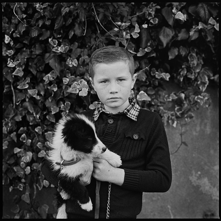 Boy with Sheepdog Pup, Ballinasloe, Galway, Ireland 2017