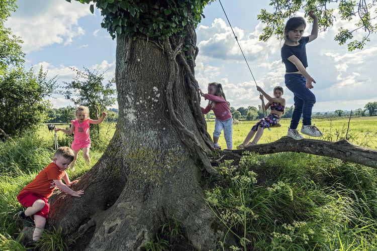 Caseys Children around Big Old Tree, Limerick, Ireland 2019