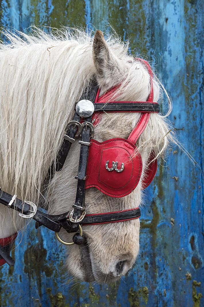 Details on a Pony, Cork, Ireland 2020