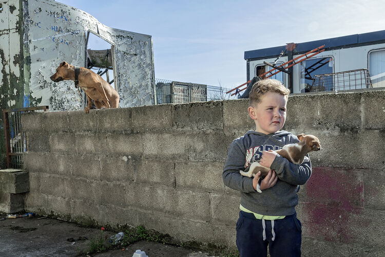 Fono with A Puppy, Limerick, Ireland 2018