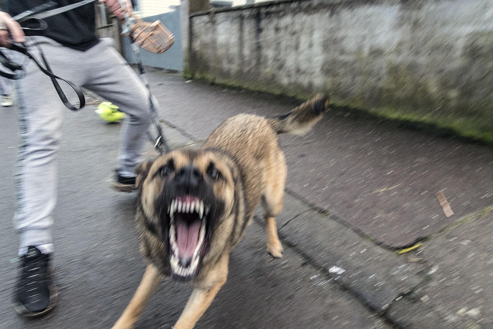 Guard Dog, Cork, Ireland 2020