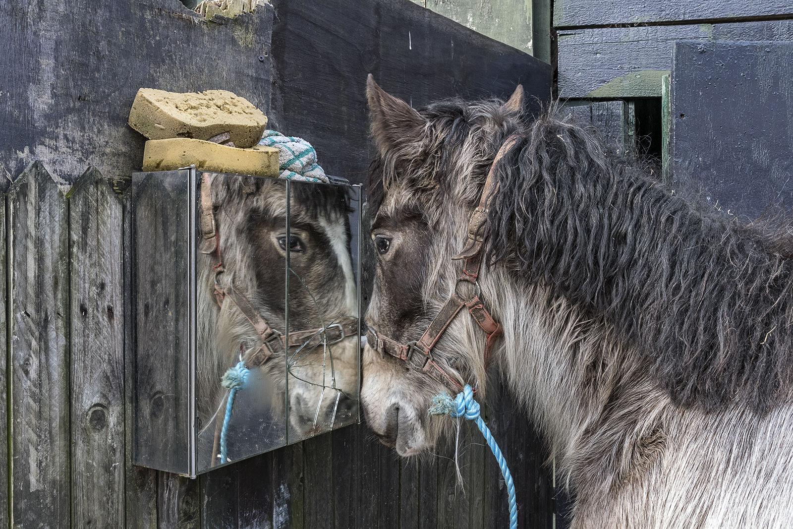 Horse Reflection, Cork, Ireland 2020