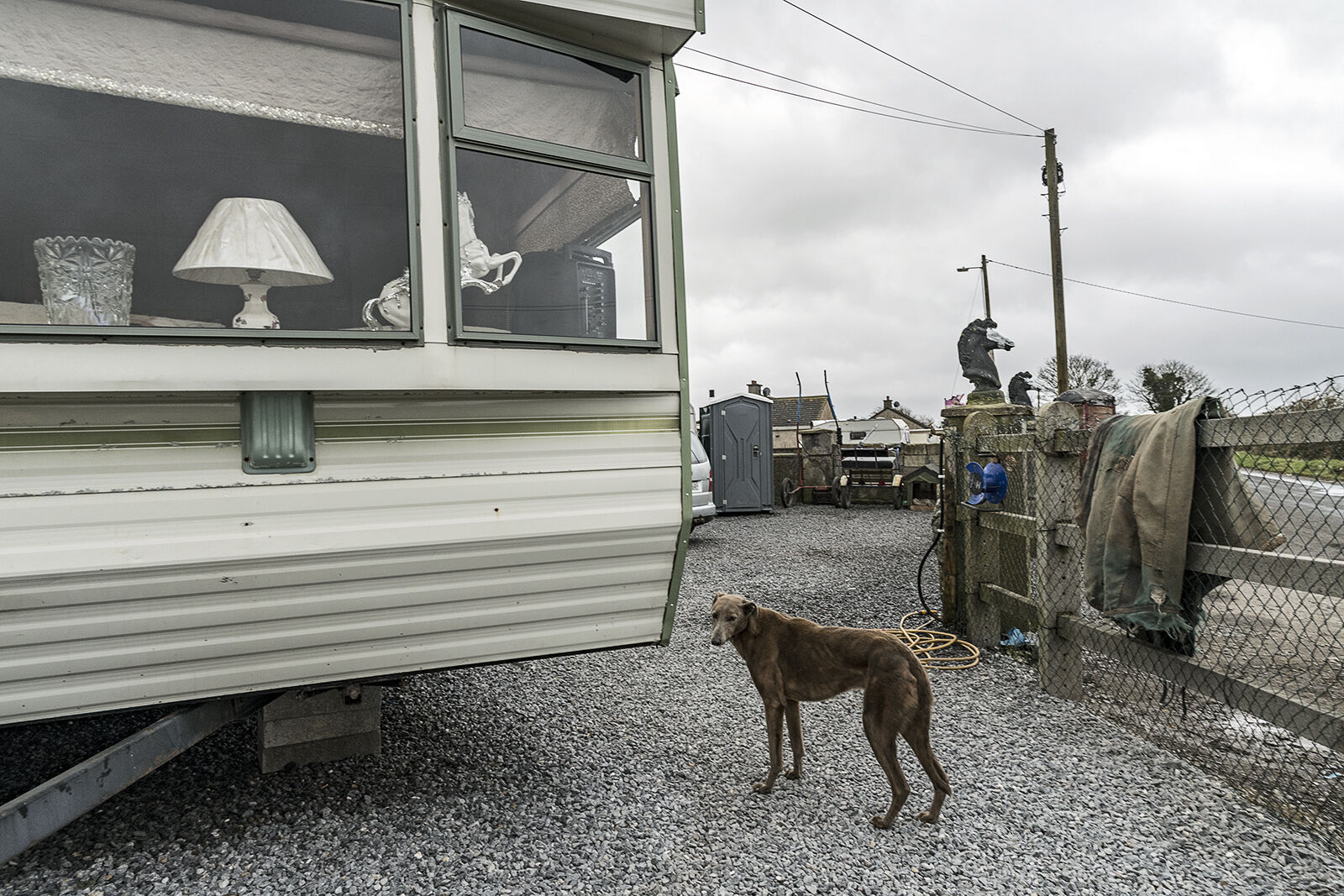 Lurcher at Reilly's Campsite, Tipperary, Ireland 2020