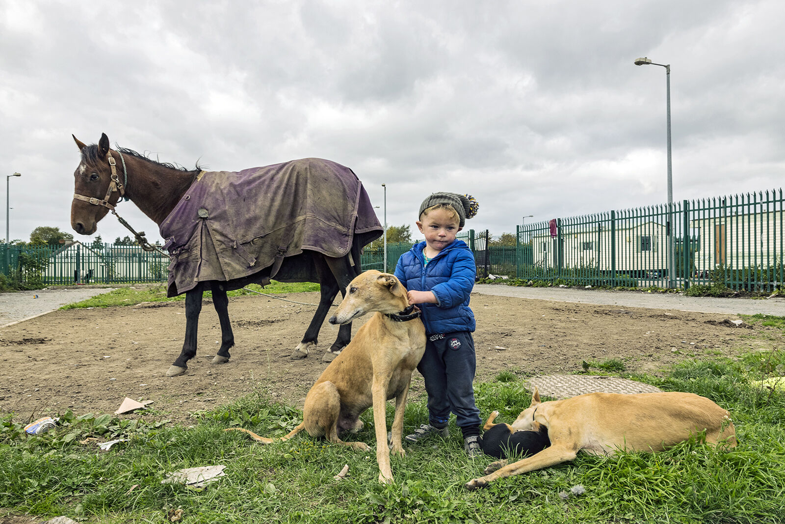 Michael with Dogs and Horse, Tipperary, Ireland 2018