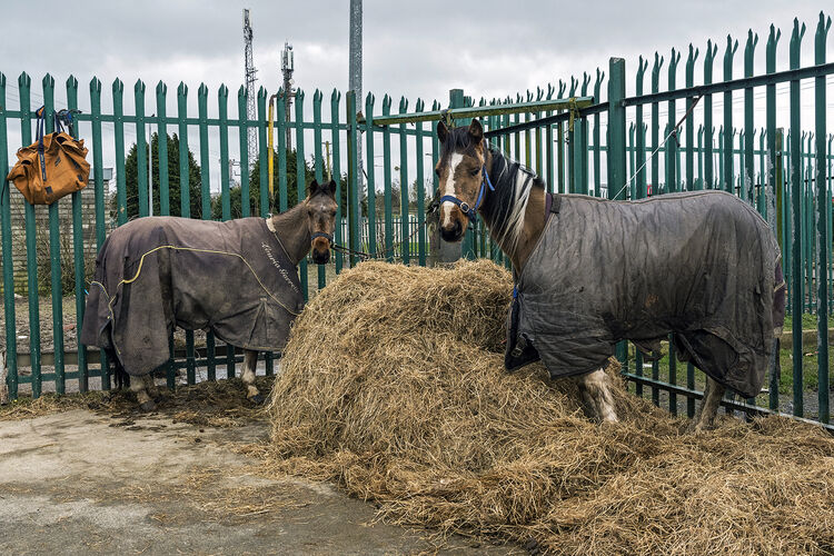 Ned's Trotter Horse, Tipperary, Ireland 2020