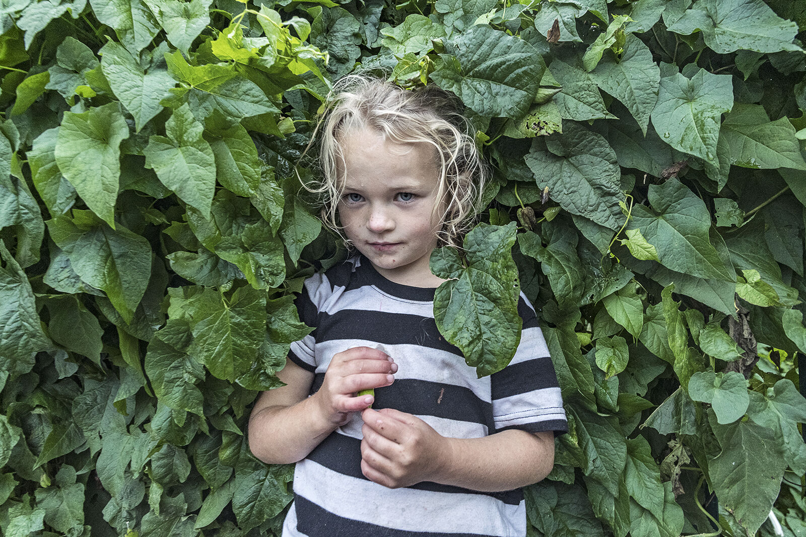 Nikita Holding Bindweed Flower, Tipperary, Ireland 2019