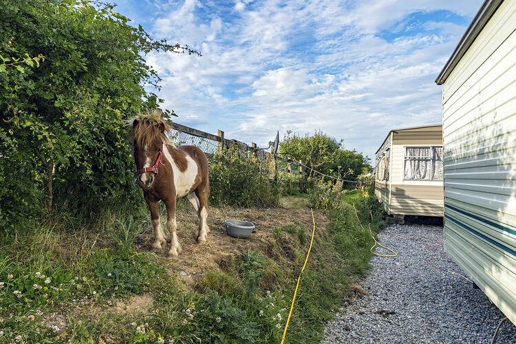 Pony and Caravans, Tipperary, Ireland 2020