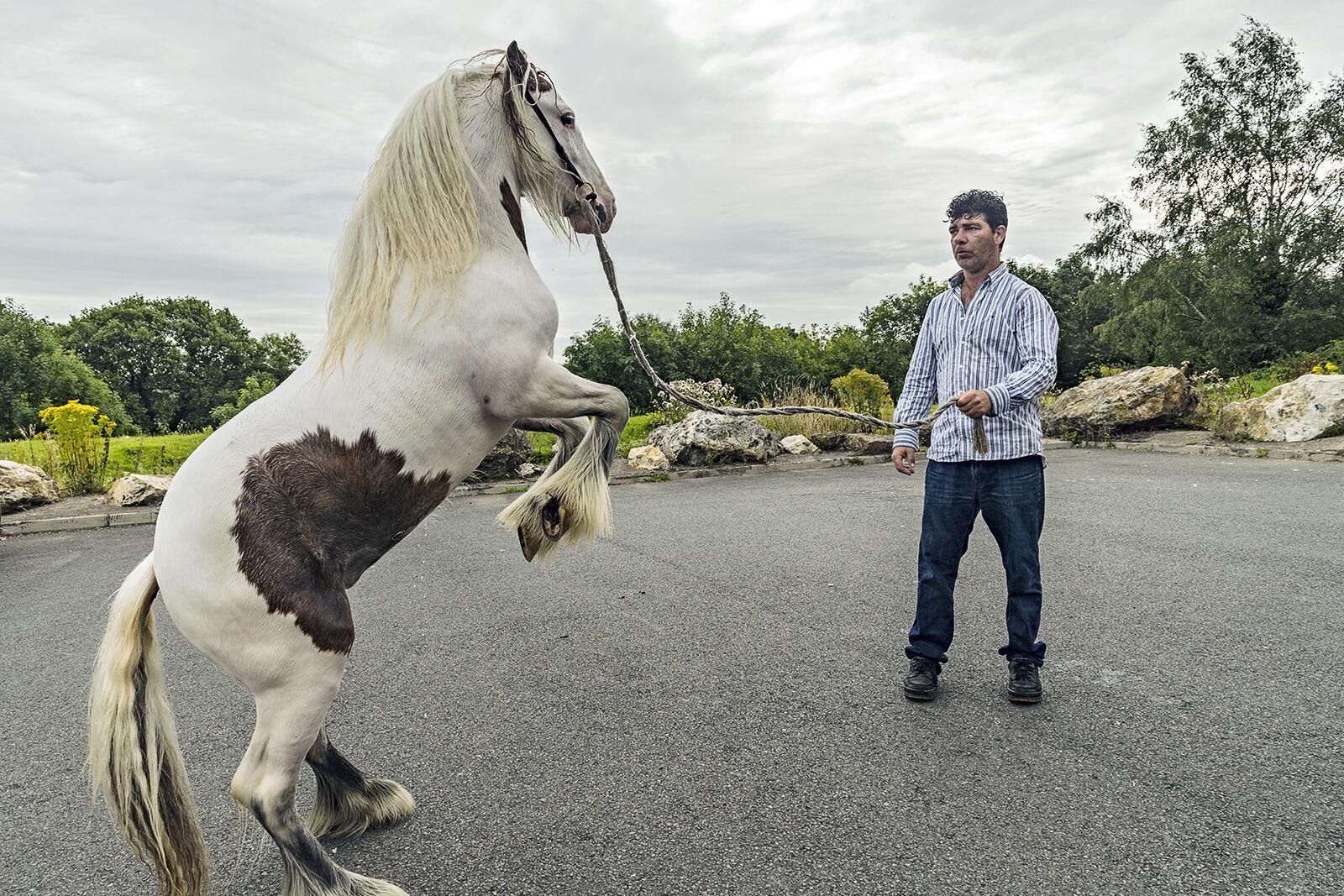 Rearing Pony, Wexford, Ireland 2019