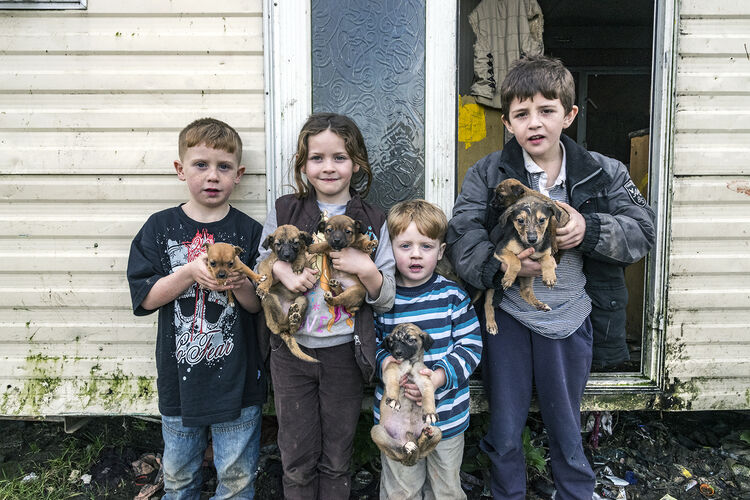 Reilly Siblings With Puppies, Tipperary, Ireland 2019