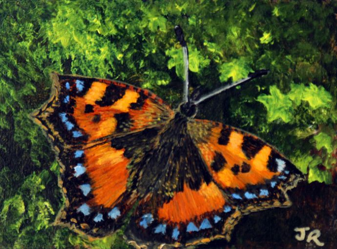 Little Tortoisehell **Sold**
